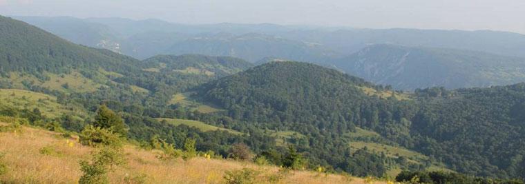 Lovište Orlovica